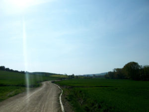 Road to Villafranca de Montes de Oca, surrounded by trees in a sunny day