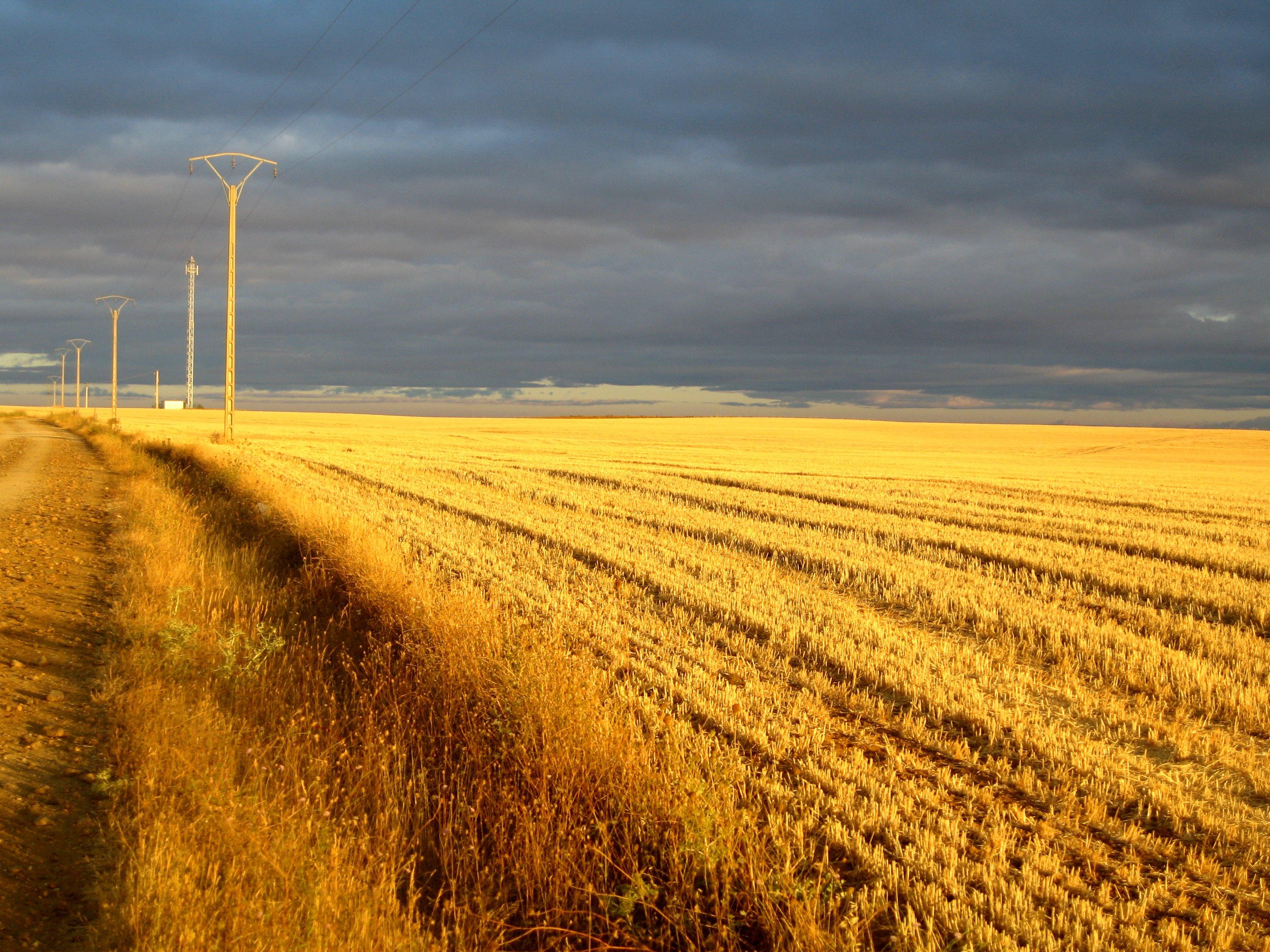 Campos de Camino a Reliegos (Fotografía por David Hunkins)