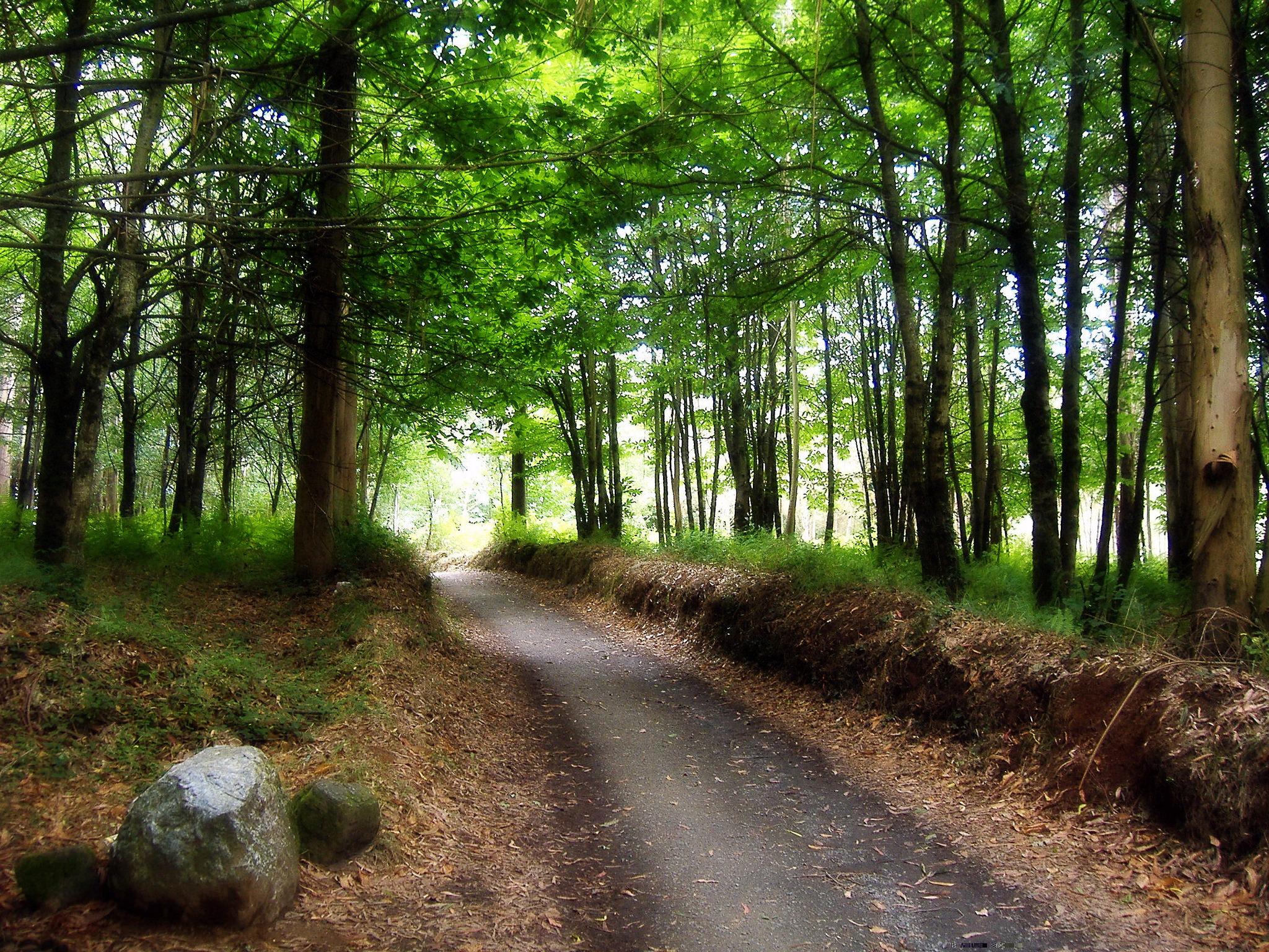 Pista asfaltada del Camino Francés ya en Galicia