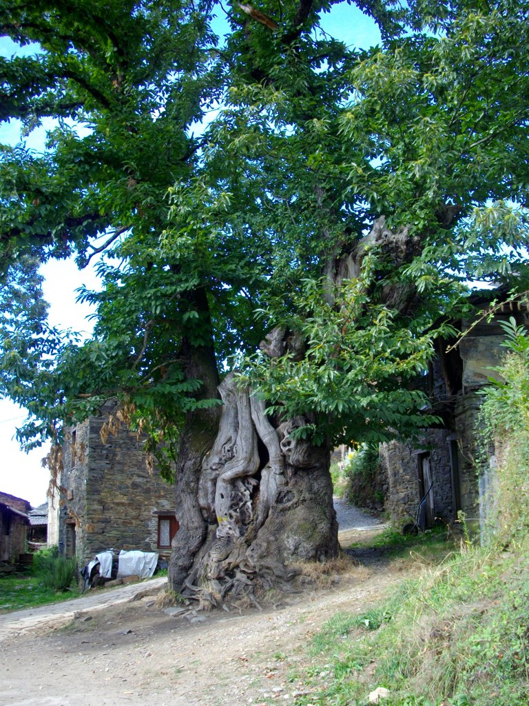 Old Chestnut located in Ramil