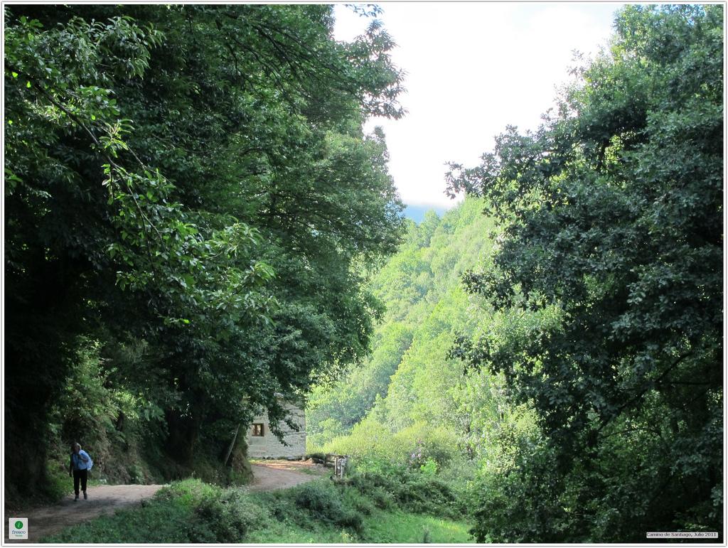 Tramo del Camino por San Xil rodeado de naturaleza salvaje