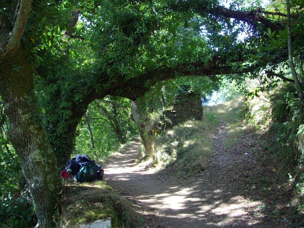 Senda en el bosque hacia Samos con un peregrino haciendo una parada de descanso