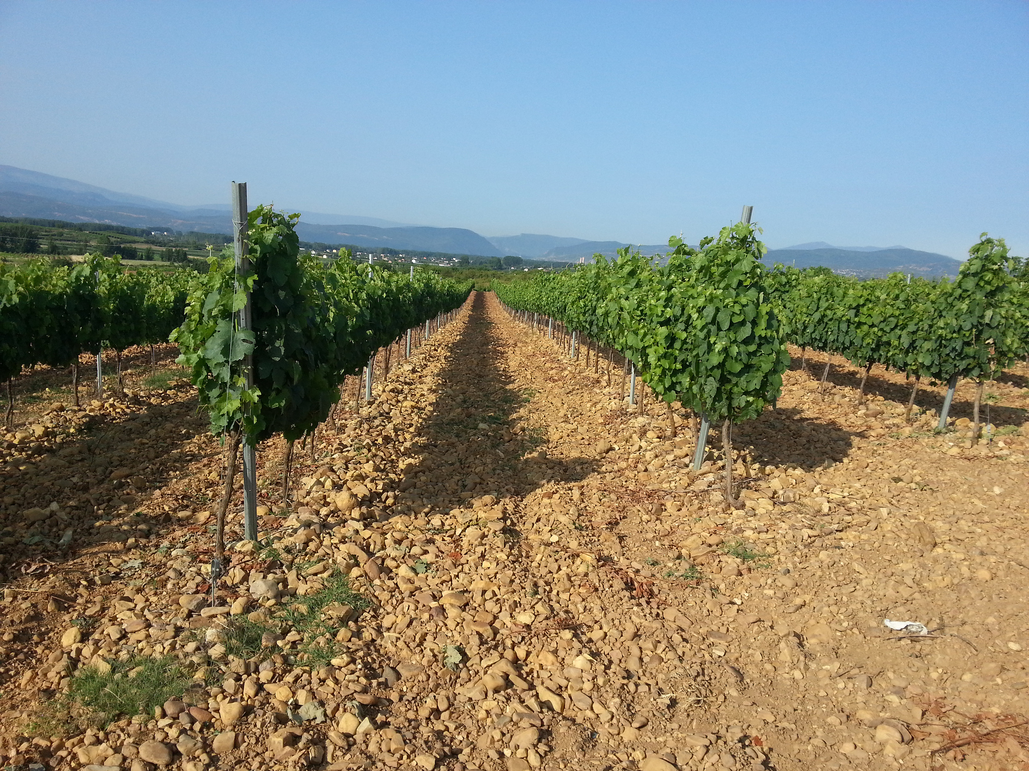 Vineyards in the Bierzo