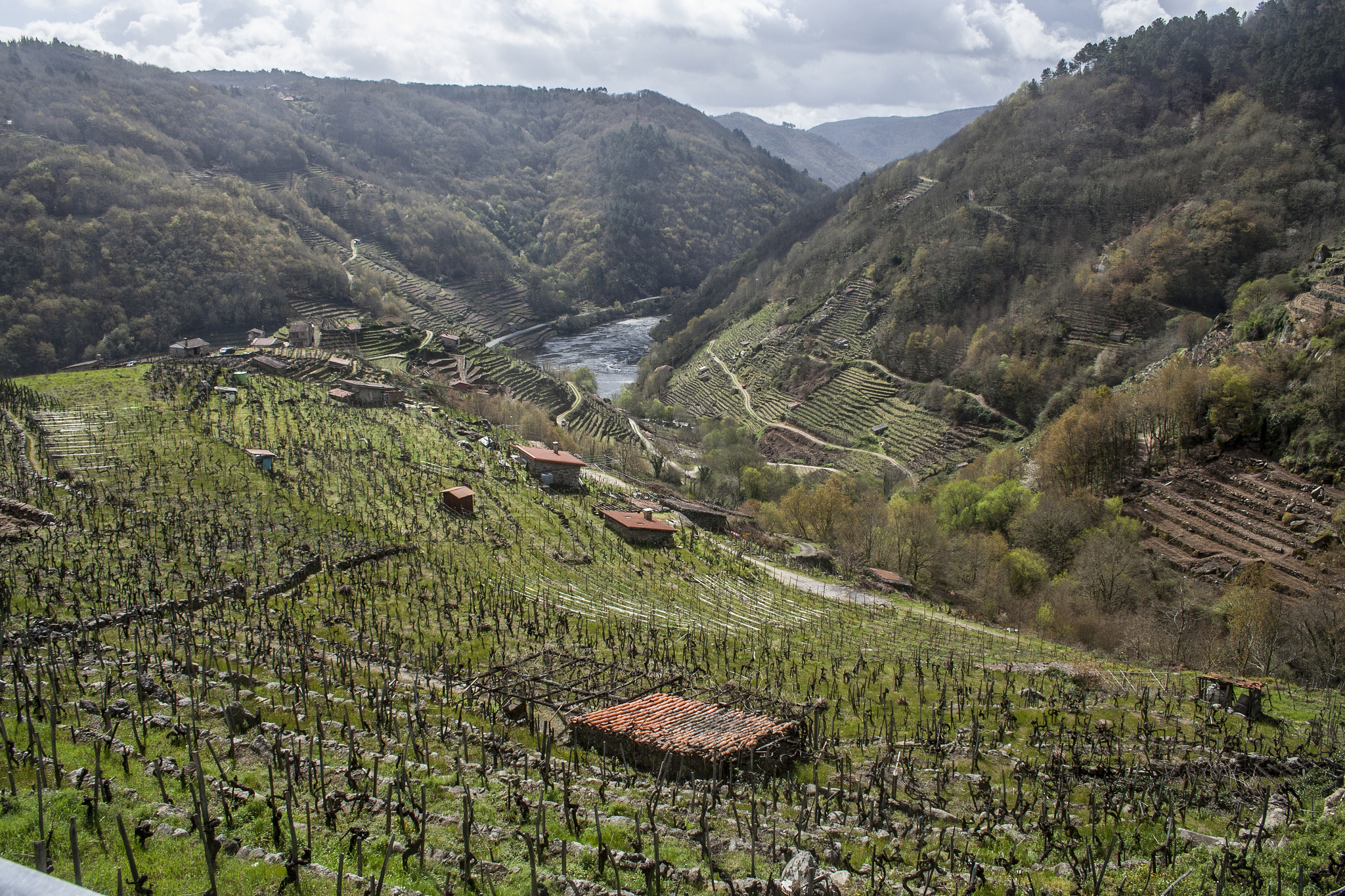 Vineyards in the canyons of the Ribeira Sacra